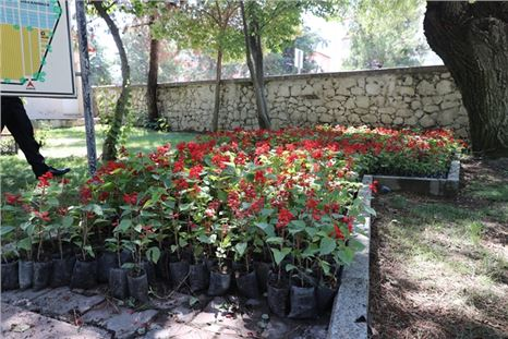 Burdur Belediyesi 120 bin çiçeği ücretsiz dağıttı