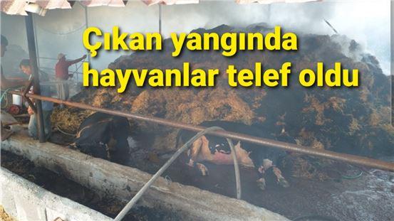 Tarsus'ta ahırda çıkan yangında 13 büyükbaş hayvan telef oldu