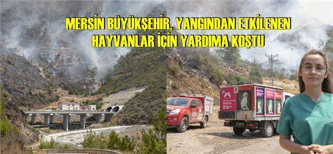 Büyükşehir ekipleri, yangın bölgesinde can dostlar için 7/24 sahada