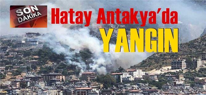 Hatay'da orman yangını! Evler tahliye edildi