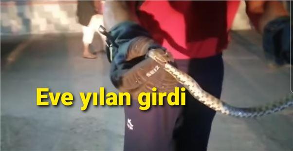 Mersin'de bir eve yılan girdi