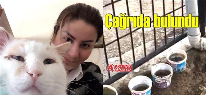 Gözen'den sokak hayvanlarının su ihtiyaçlarının karşılanması için çağrı
