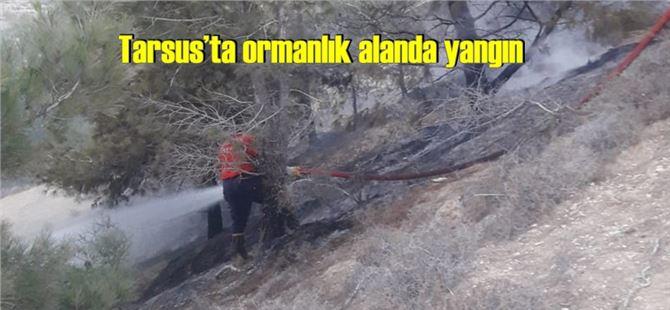 Tarsus'ta ormanlık alanda yangın