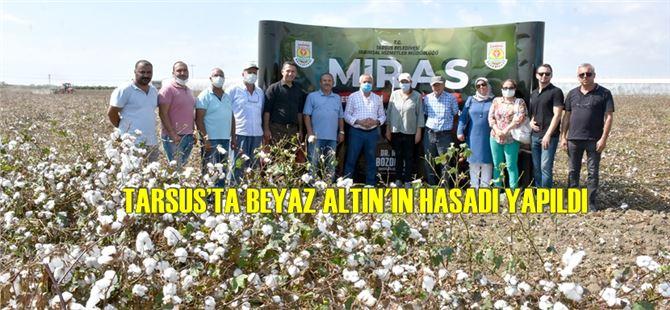 Tarsus'ta Beyaz Altın'ın hasadı yapıldı